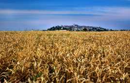 Monflanquin dans les blés