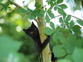 Chat-Chouette