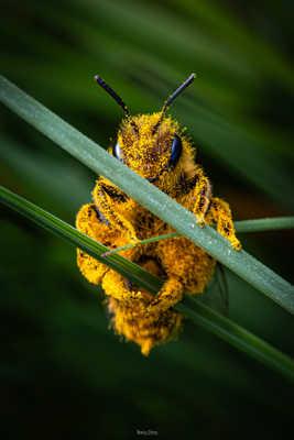 L'ouvrière du pollen