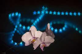 Foto loco orchidée