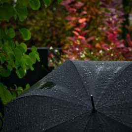 Sous la pluie, le parapluie!