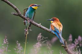 Duo coloré