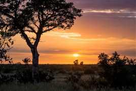 Sunrise sur le bush africain