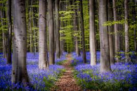 Bienvenue dans la forêt enchantée...