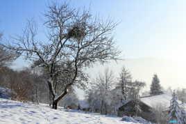 Paysage d'hiver dans les Vosges