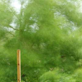 arbre dans la tempête