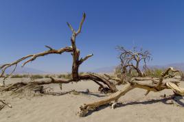 Death Valley 119°F