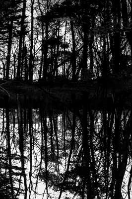 La forêt au miroir