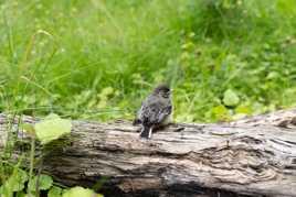 Un oiseau qui pose