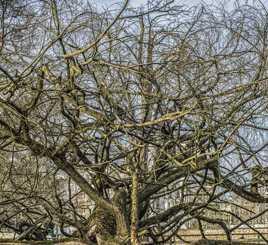 l'arbre du délice...