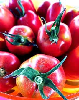 Tomatos (du jardin)