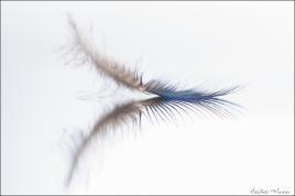 L'oeil et la plume