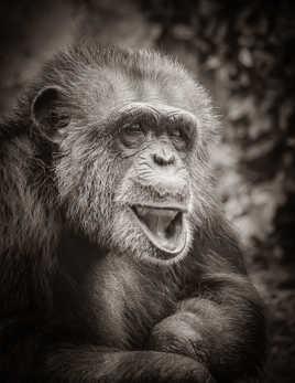 On n'apprend pas aux vieux singes à faire des grimaces.