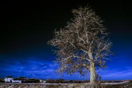 L'arbre invisible... à l'oeil nu