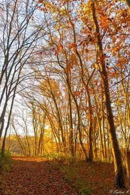 Sous-bois aux couleurs de l'automne