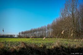 paysage printanier du Nord Pas de Calais