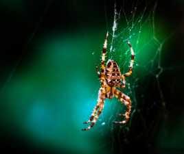 arachnide d'été