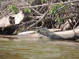 Rencontre sur le fleuve Ogoué