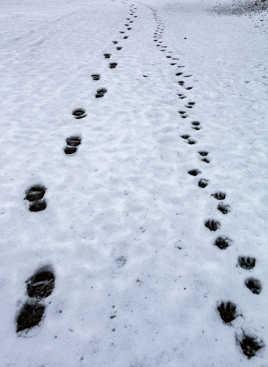 chacun ses pas, chien et humain