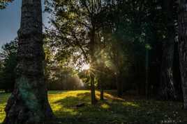 seule dans le parc