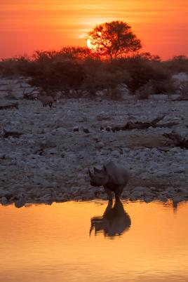 Rhino in the sunset