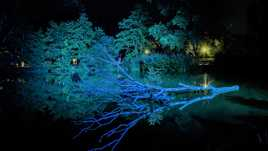 Reflets nocturne sur l'étang