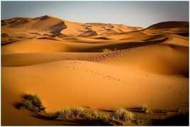 Sahara ..