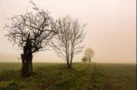 mon chemin dans la brume