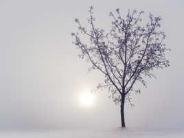 Dans la neige et le brouillard