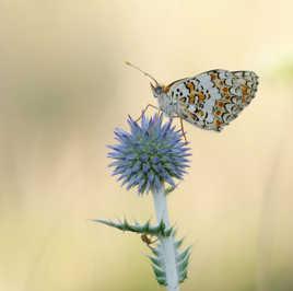 Le chardon, le papillon et l'araignée.