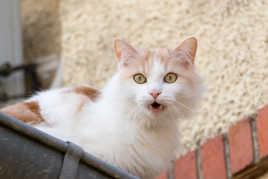 Gouttière à chat