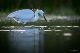 La chasseresse de l'étang