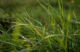 Perle d'eau au ras du sol