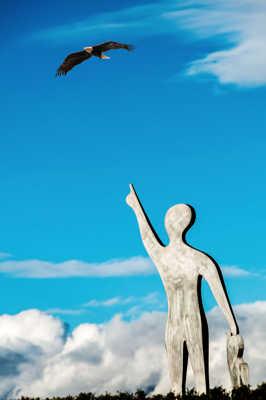 Un aigle dans le ciel