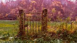 Knocking on Autumn Door