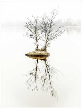 brouillard sur l'étang