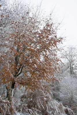 souvenir de la guerre des saisons
