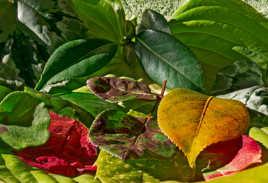 feuilles du jardin