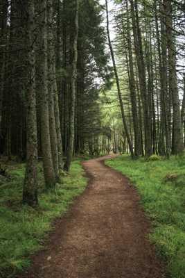 Sous Bois Ecossais
