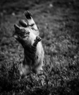 la danse de Simba