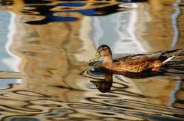 glisse sur l'eau