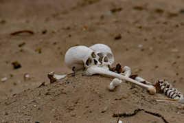 unis à la vie et à la mort