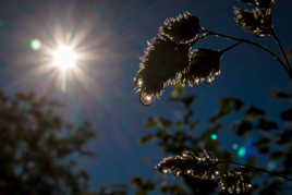 Soleil et soleil en gouttes