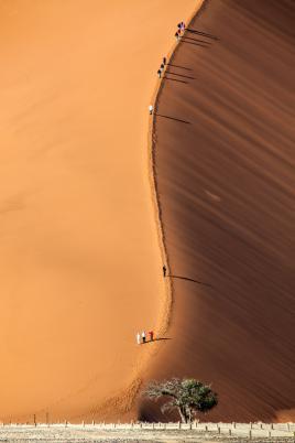 Dune 47