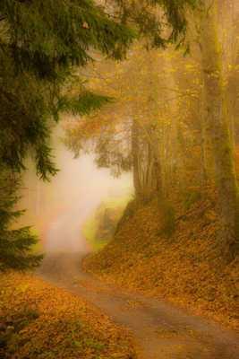 Chemin brumeux