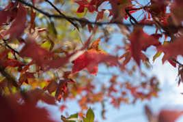 L'automne arrive!