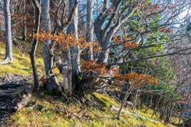 L'automne en randonée