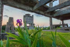 La fleur et les forges