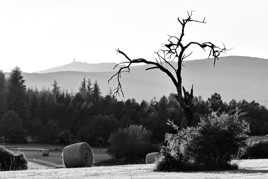 Un vieil arbre