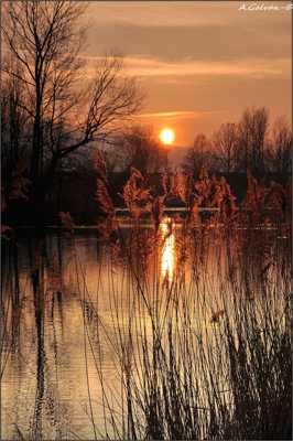 début de soirée sur l'étang